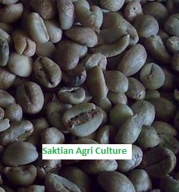 Coffee bean from Indonesia